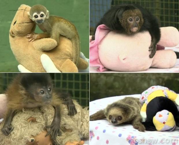Bichinhos de pelúcia ajudam no tratamento dos animais silvestres (Fot Mais Você / TV Globo)