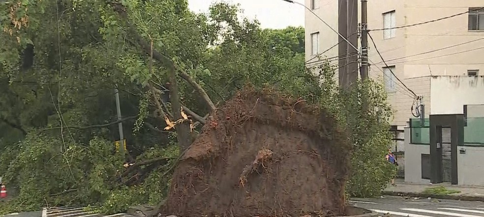 Árvore de grande porte cai durante tempestade no bairro Santa Amélia, na Região da Pampulha — Foto: Reprodução/TV Globo