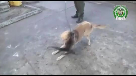 Cachorra adota macaco na Colômbia