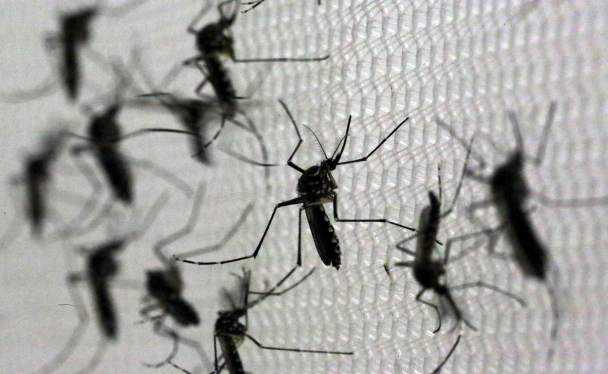 Campinas faz mutirão para eliminar criadouros do Aedes aegypti em todas as regiões neste sábado