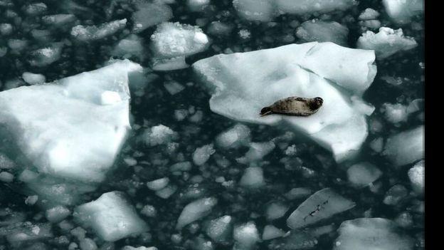 O derretimento do gelo do Ártico pode reduzir a quantidade de raios solares refletidos de volta para o espaço (Foto: Getty Images via BBC)