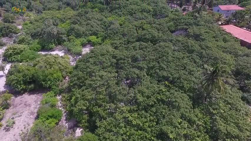 VÍDEOS: Piauí de Riquezas, 24 de outubro de 2020