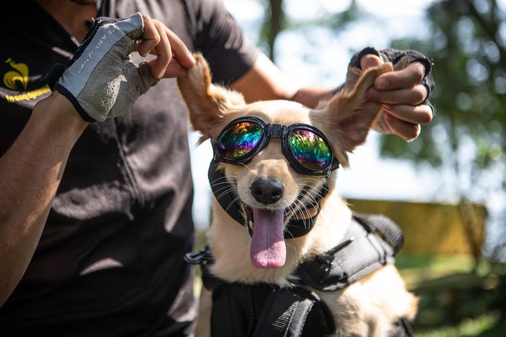 Cachorra Yellow ganhou fama nas redes sociais — Foto: Fabio Tito/ G1