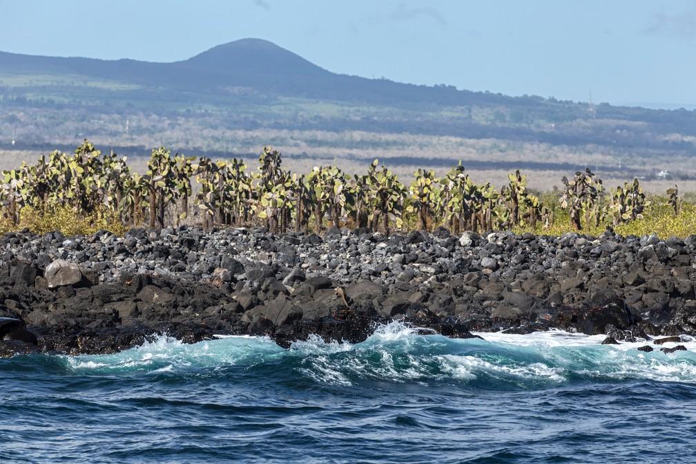 Cactus gigantes crescem perto da costa da Ilha de Santa Cruz (Foto: Pablo Cozzaglio/AFP)