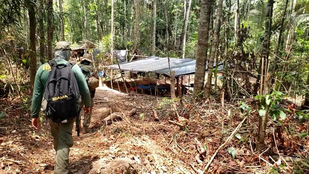 Operação contra garimpo e extração ilegal de madeira ocorreu nesta semana em terra indígena de Rondônia.  — Foto: PF/Divulgação