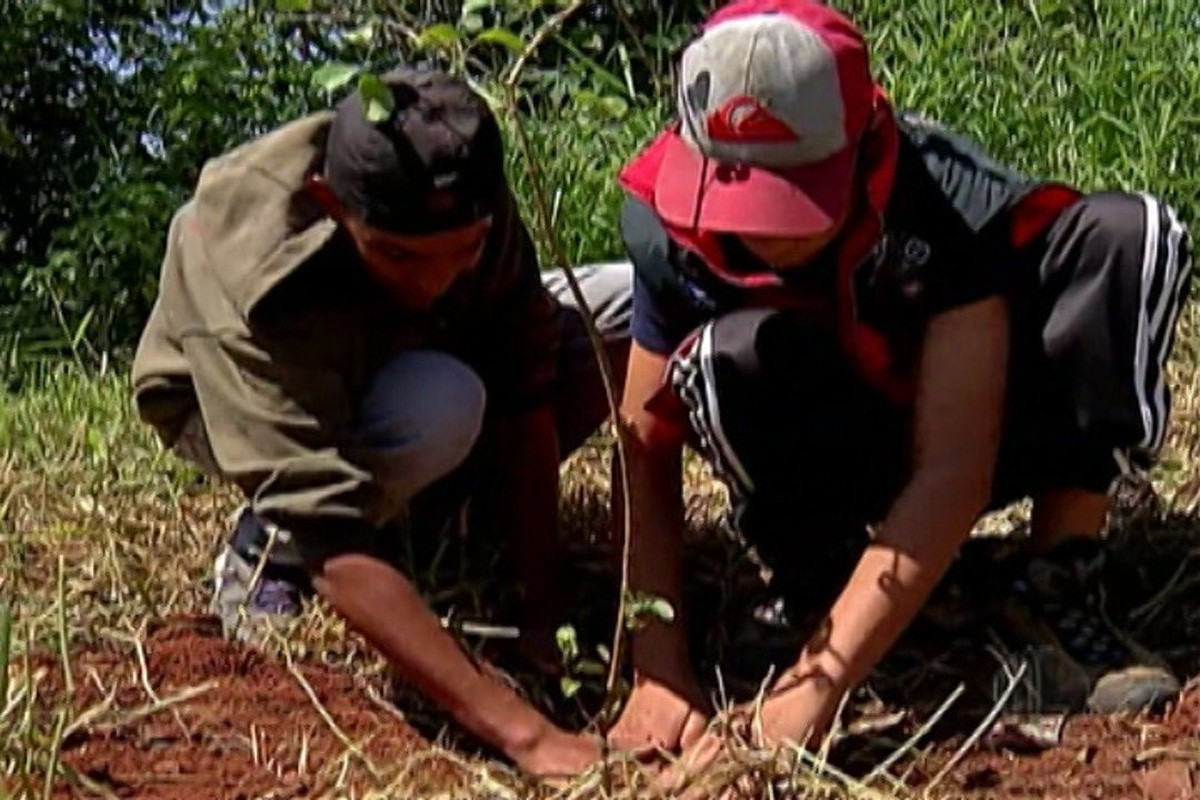Jardim Layr, em Mogi das Cruzes, ganha mudas nativas