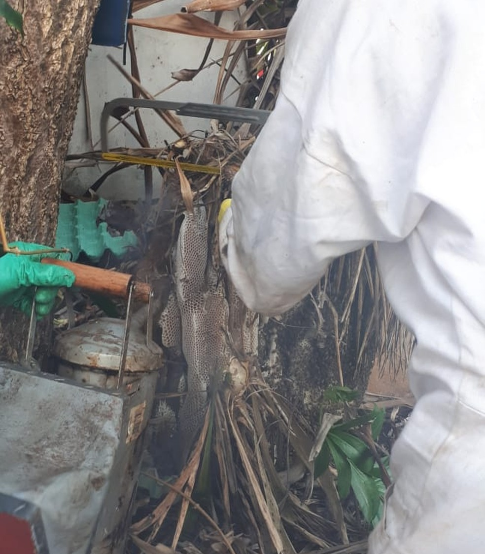 Operação de captura durou cerca de cinco horas — Foto: Corpo de Bombeiros/Divulgação