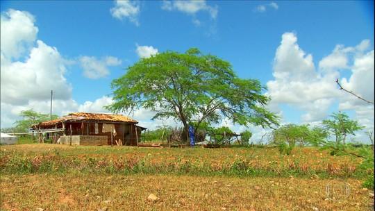 Projeto no entorno do Rio São Francisco alia gestão da água com produção rural na caatinga
