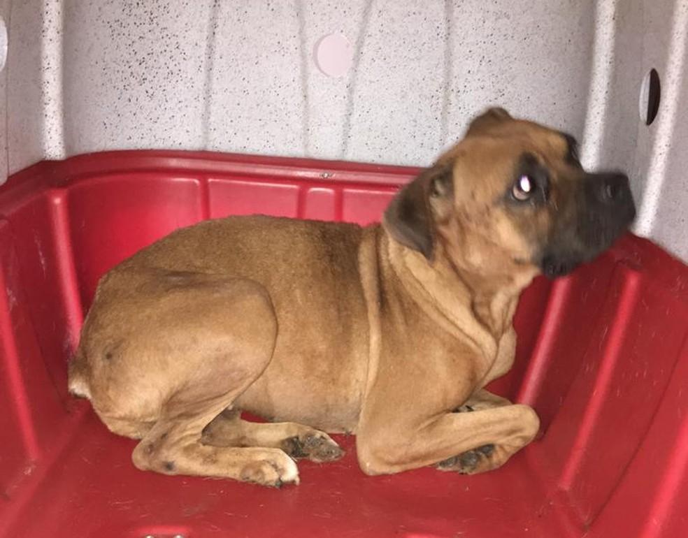 Animais foram resgatados após denúncias de maus-tratos em Lençóis Paulista  — Foto: Prefeitura de Lençóis Paulista / Divulgação
