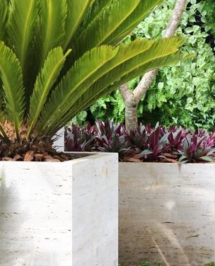 7 plantas para forração de vasos
