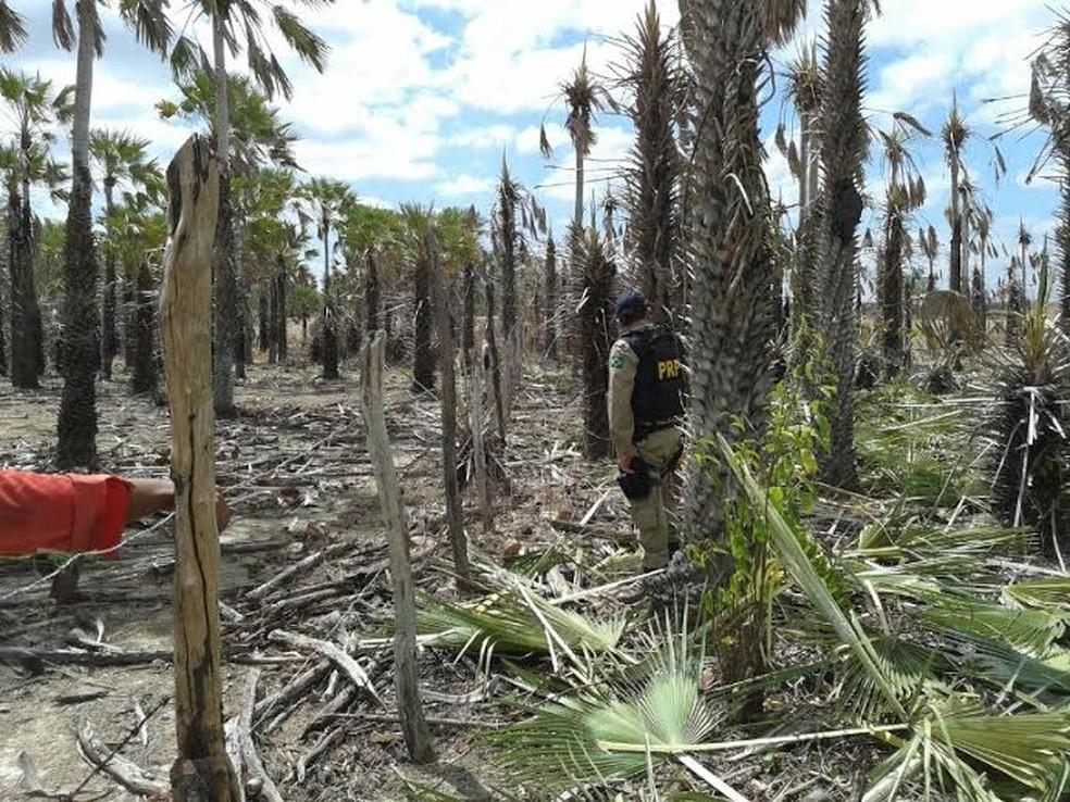 Ministério do Trabalho e Emprego resgata trabalhadores em condições de escravidão em fazendas no interior do Ceará (Foto: PRF/Divulgação)