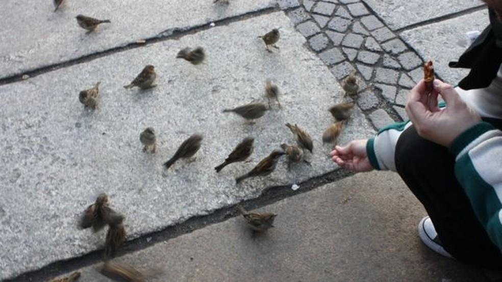 Pássaros encontram ampla oferta de comida nas grandes cidades (Foto: MARIANA VEIGA)