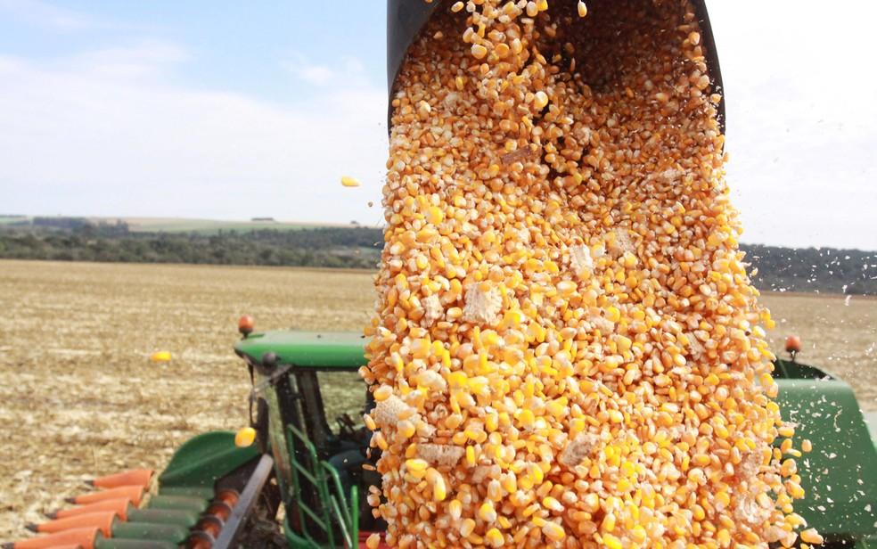 Produção do milho safrinha em Rondônia tem crescimento — Foto: Dirceu Portugal/Fotoarena/Estadão Conteúdo