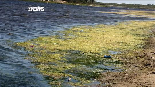 Gabeira volta à região fluminense onde abacaxi nasce salgado
