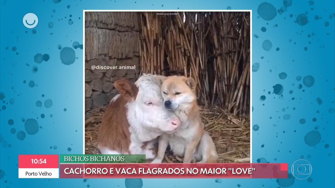 'Bichos Bichanos': divirta-se com os vídeos de animais mais engraçados da internet