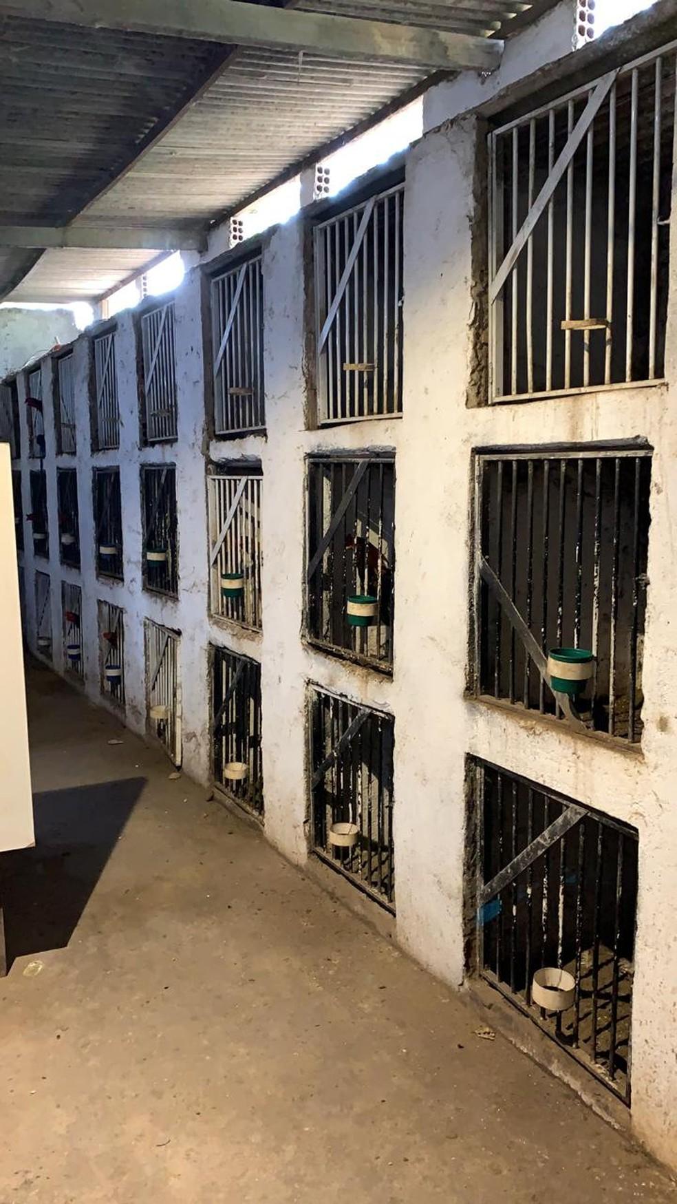 Animas eram mantidos em gaiolas e foram apreendidos pela Polícia Ambiental — Foto: Divulgação/PM