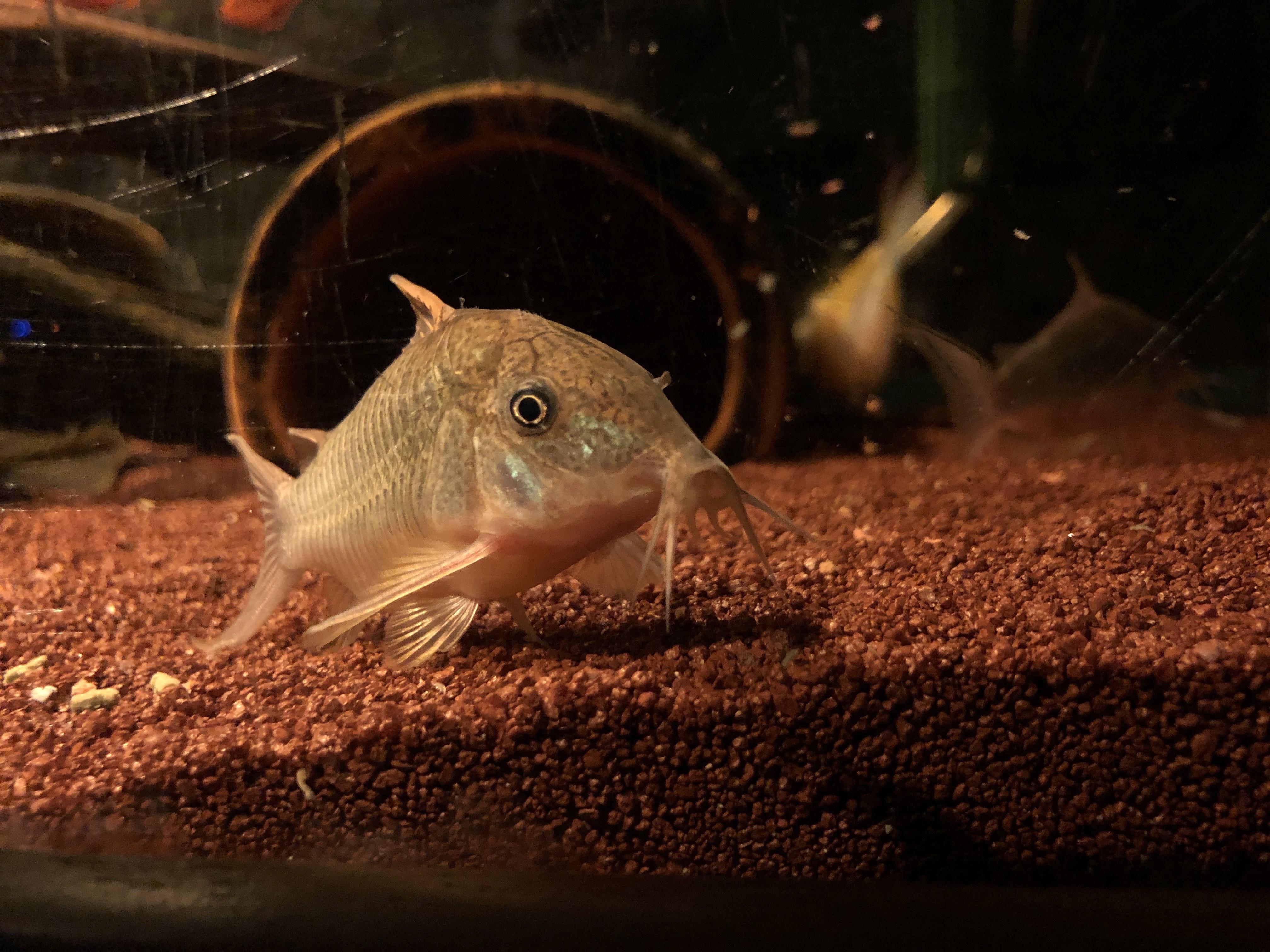Como o mercado de peixes ornamentais ajuda a preservar outras espécies - Notícias - Plantão Diário