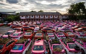 Na Tailândia, teto de táxis é usado como horta para motoristas desempregados