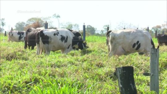 Produtores de leite se tornam modelo de produtividade com programa Balde Cheio em RO