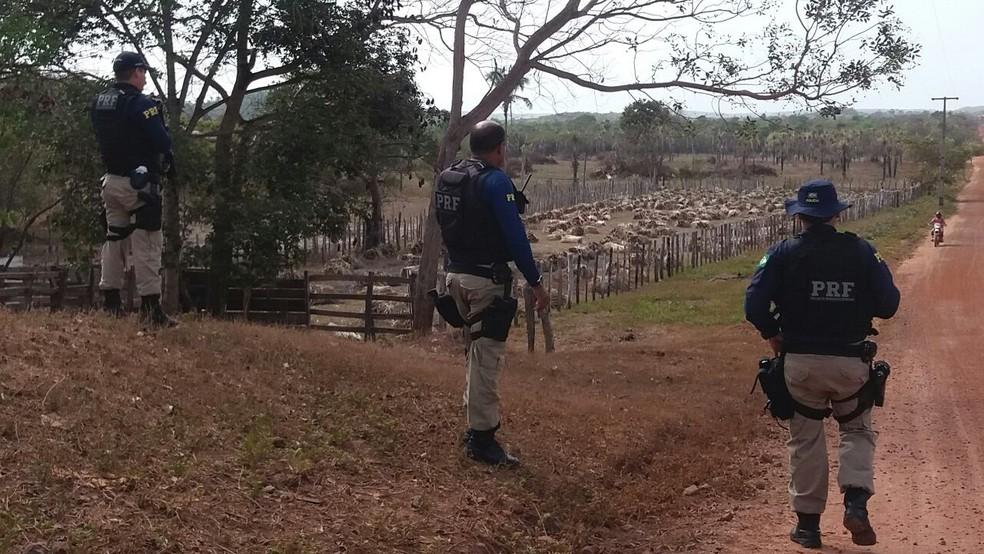 Operação foi realizada na cidade de Vargem Grande (Foto: Divulgação / PRF)