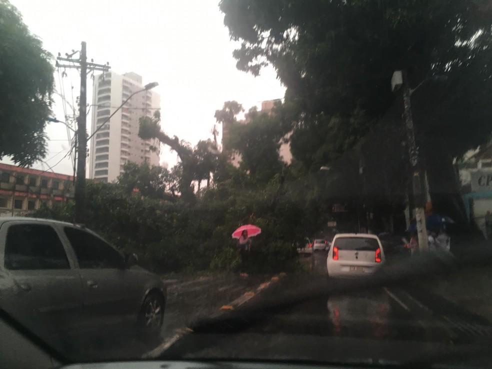Árvore cai durante forte chuva e interdita via no centro de Belém — Foto: Redprodução/Tv Liberal