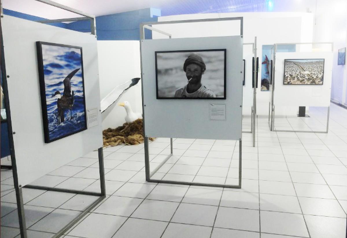 Museu Oceanográfico recebe exposição sobre o Projeto Albatroz em Arraial do Cabo, no RJ