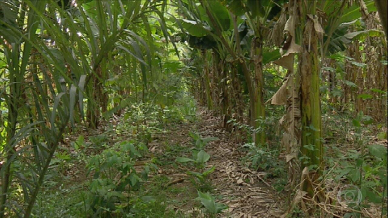 Veja a importância da diversidade de plantas no cultivo de alimentos