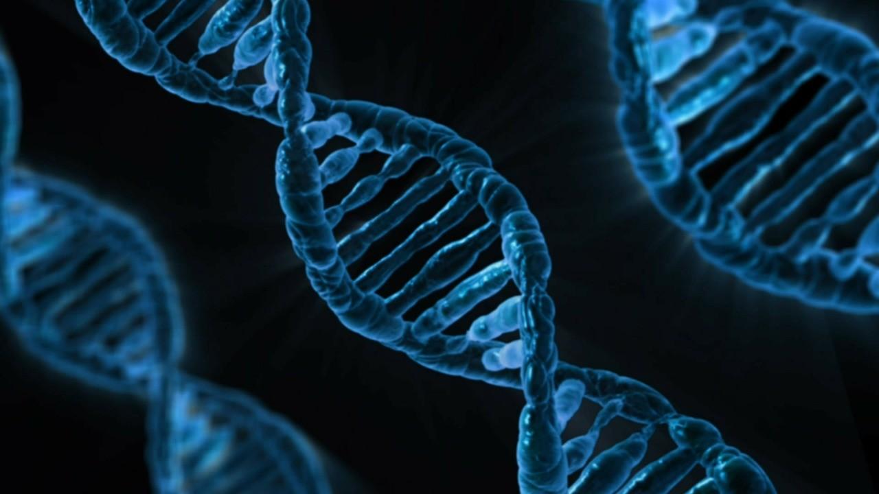 O estudo do DNA em humanos pode melhorar o tratamento de doenças genéticas (Foto: Pexels)