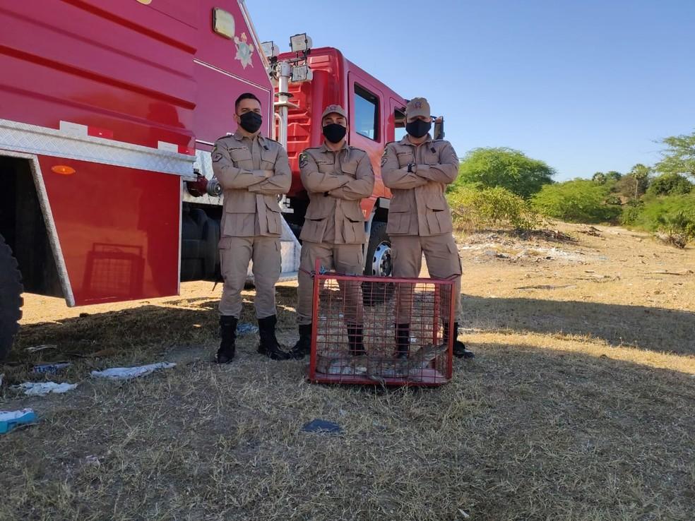 Resgate do jacaré foi feito por agentes do quartel de Ipueiras. — Foto: Corpo de Bombeiros/ Divulgação