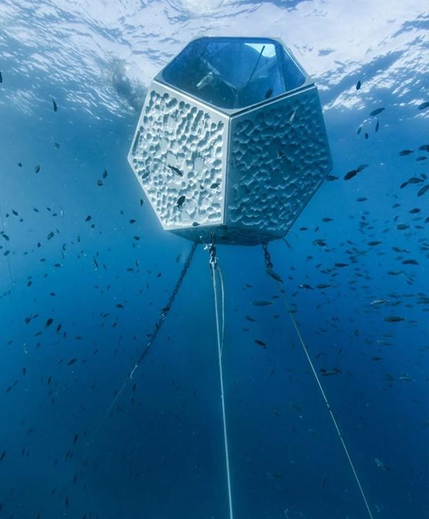 Os animais cercam a instalação e interagem com os pavilhões (Foto: Parley For The Oceans e MOCA/ Reprodução)