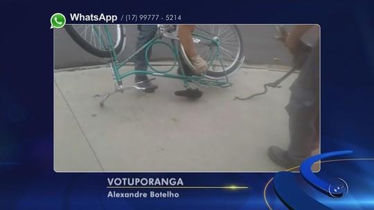 Bombeiros resgatam filhote de jiboia enrolado em banco de bicicleta