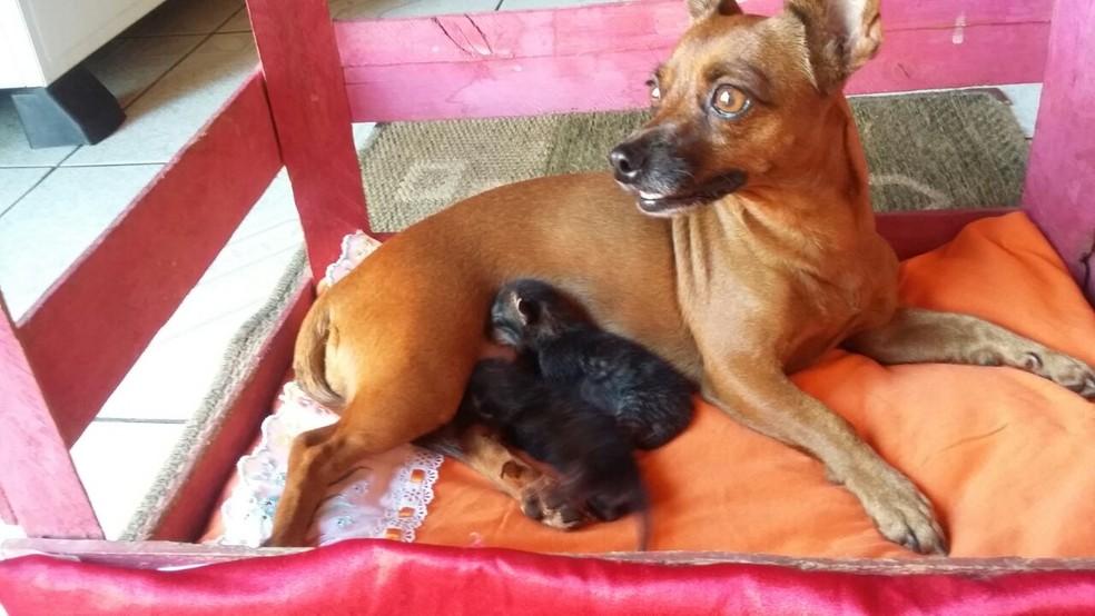 Lupita amamenta dois gatinhos que foram abandonados (Foto: Divulgação/Waniceia)