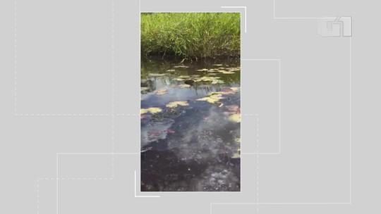Peixes aparecem mortos em rio de fazenda na BA e dono suspeita de vazamento de óleo
