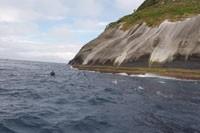Nadadores em Alcatrazes na 1ª Volta a nado no arquipélago