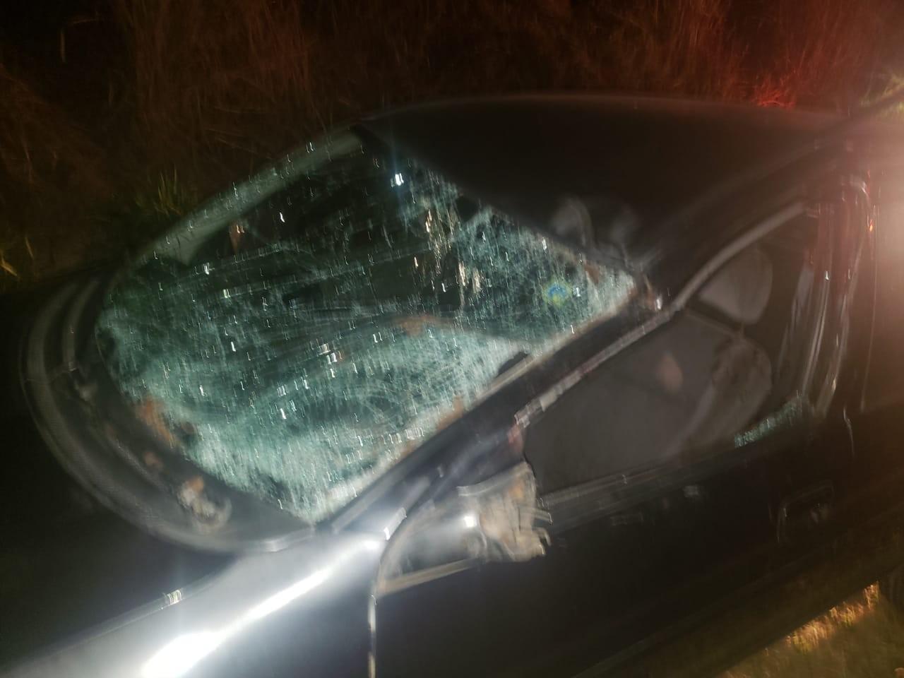 Cavalo morre após ser atropelado por dois veículos em vicinal que liga Garça a Ubirajara - Notícias - Plantão Diário