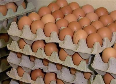 tv-ovos-organicos (Foto: Reprodução)