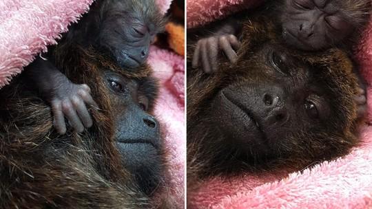 Foto: (Reprodução/Facebook/Zoológico de Guarulhos)
