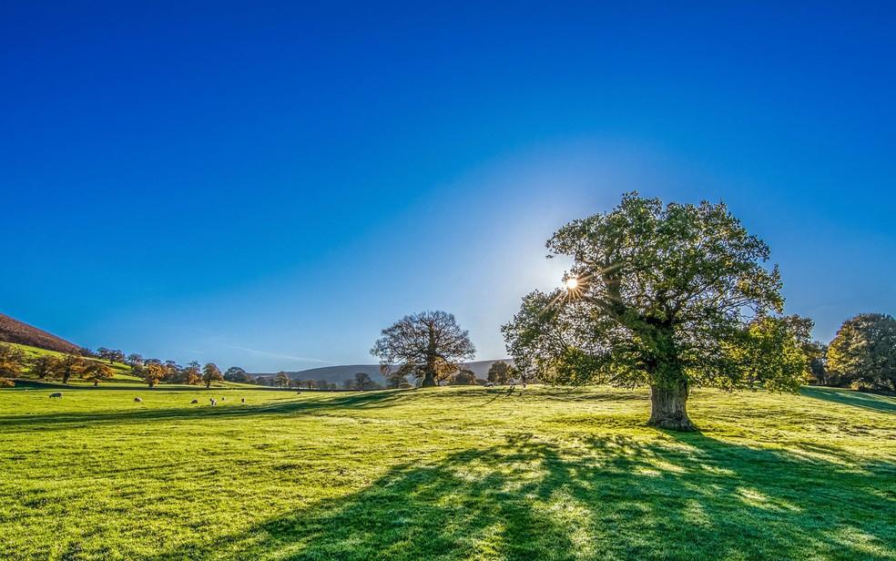 No campo, as árvores demoram mais para crescer, mas também duram mais tempo (Foto: TimHill/Creative Commons)