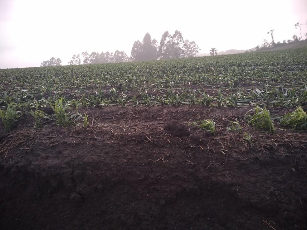 Técnicos da Epagri percorrem a região para fazer o levantamento dos estragos causados nas lavouras — Foto: Secretaria de Agricultura de Aurora