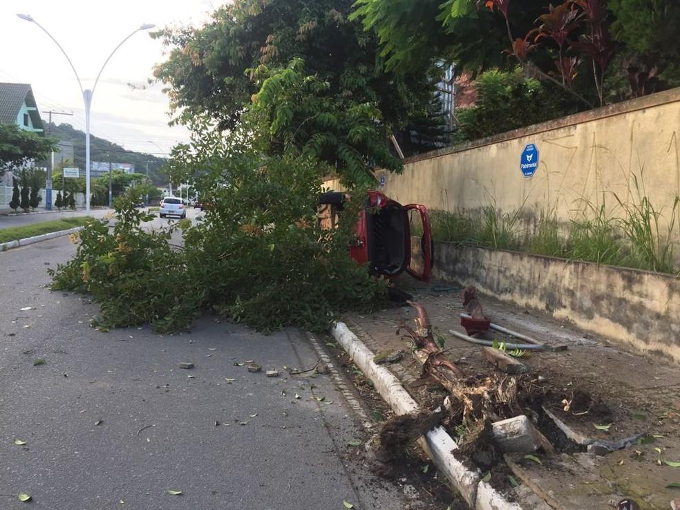Carro arrancou árvore em acidente em Balneário Camboriú (Foto: PM/Divulgação)