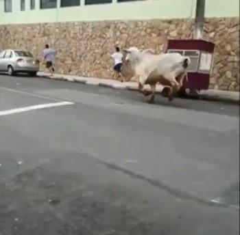 touro-perdido-iperó (Foto: Reprodução Vídeo)