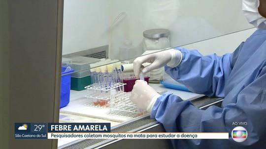 Pesquisadores coletam mosquitos na mata de SP para estudar febre amarela