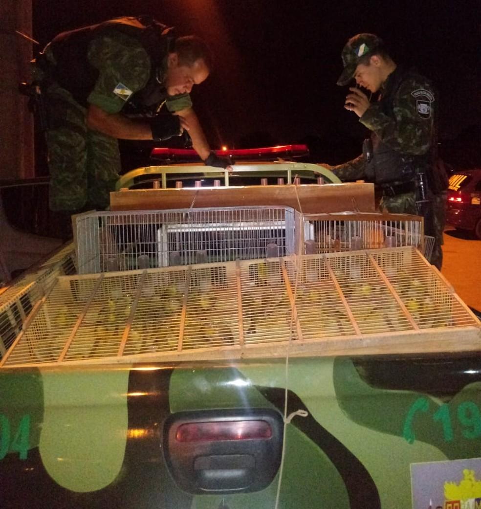 Pássaros foram entregues no Centro de Triagem de Animais Silvestres (Cetas) — Foto: Divulgação/Cipa