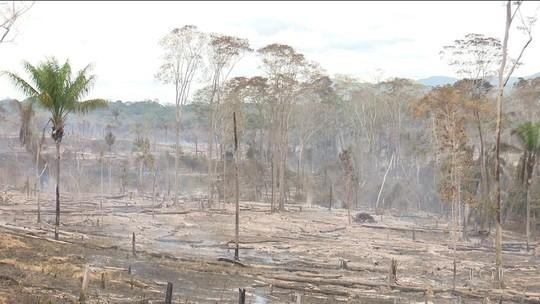 Taxa de desmatamento é 42% maior do que indicavam alertas