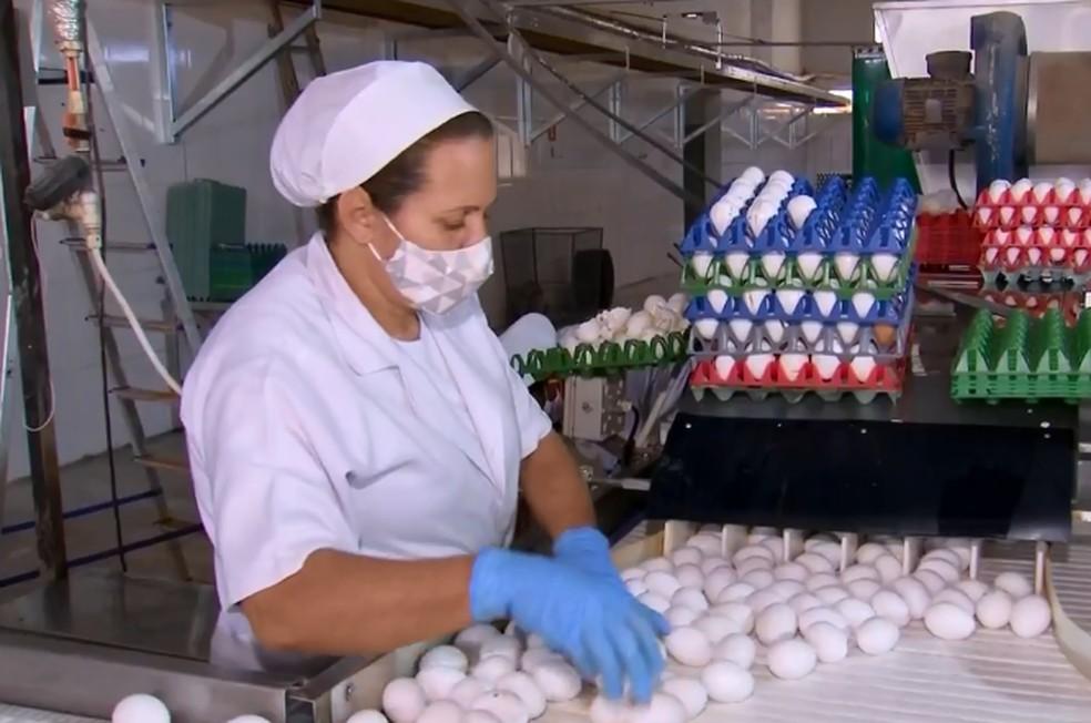 Mesmo com queda no consumo, empregos foram mantidos na granja de Bastos durante a pandemia — Foto: TV TEM/Reprodução