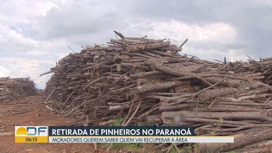 Moradores querem saber quem vai recuperar uma área de floresta no Paranoá