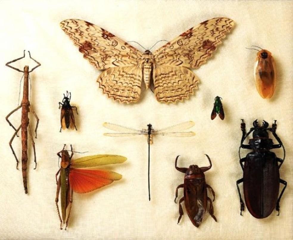 Palestra do Pint of Science em Rio Claro aborda as muitas utilidades os insetos.  — Foto: Museu Nacional/UFRJ/Divulgação