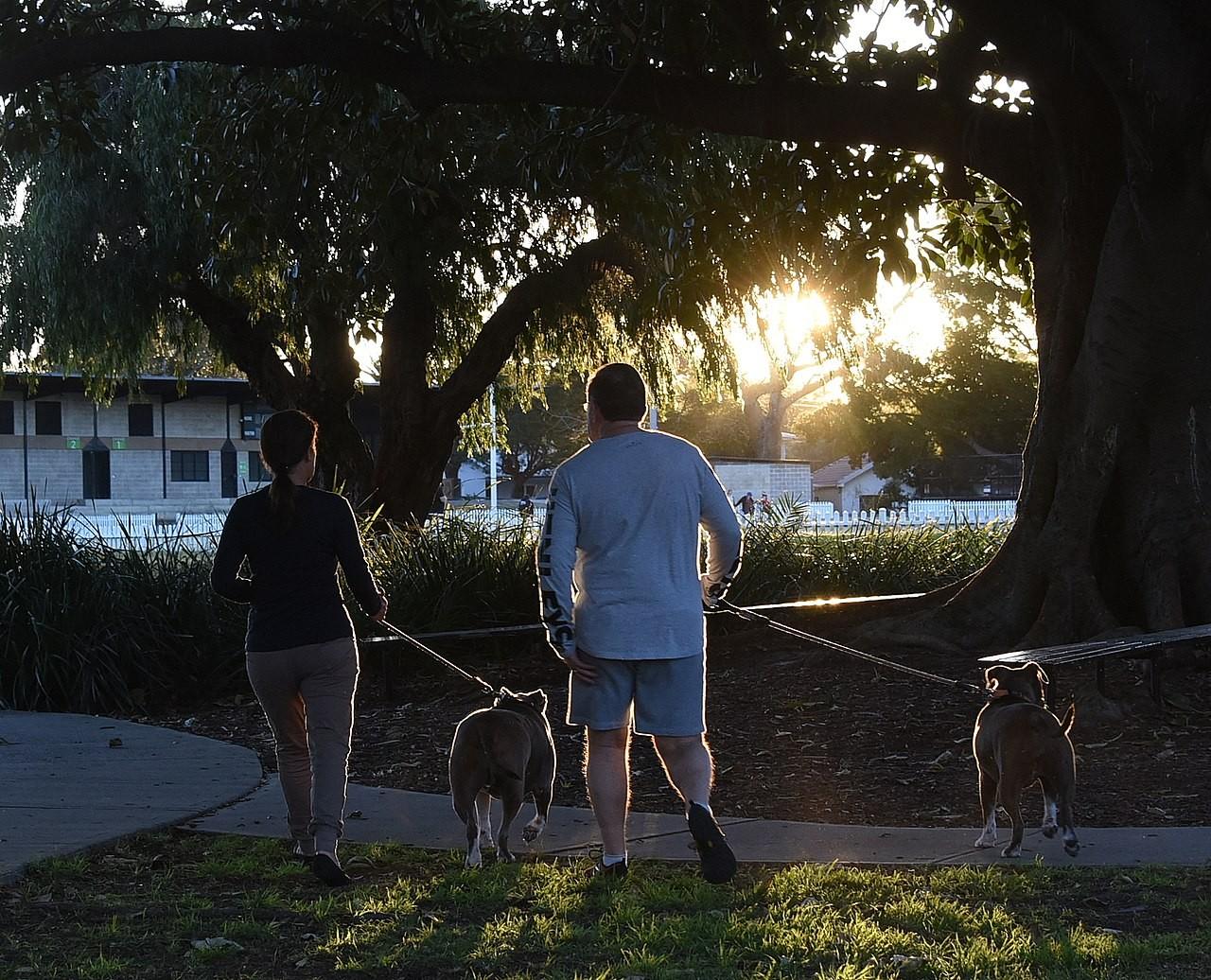 Aumenta número de fraturas em idosos que passeiam com cães