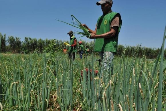 agricultura_familiar_agricultor_trabalhador (Foto: Agência Brasil)