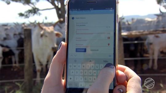 Pecuaristas apostam em aplicativo para aumentar eficiência na estação de monta